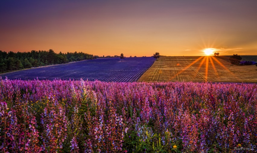 Provence01
